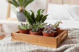 Plants You Should Put In Your Bedroom For Sounder Sleep, Remove Stress, and Anxiety